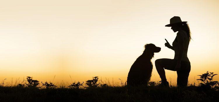 איך תמצאו את מאלף הכלבים שלכם